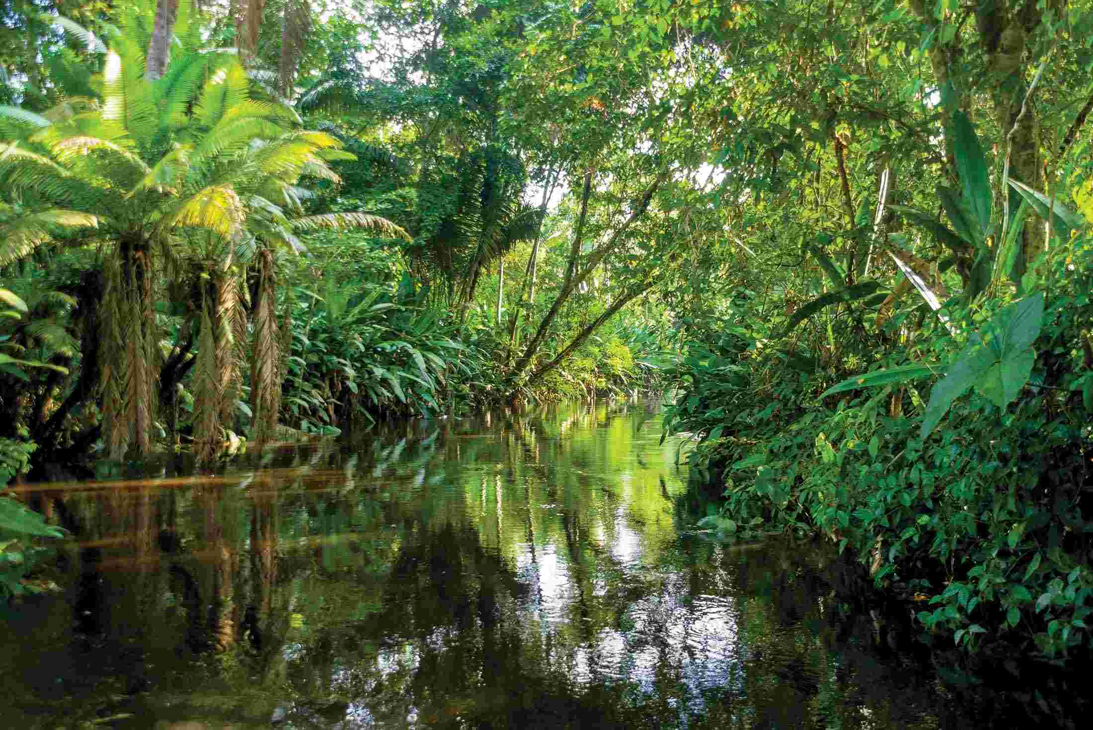 The Jungles of Tabut-Heda