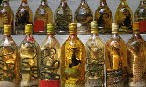 cobra-and-snake-wine-weird-drink.jpg
